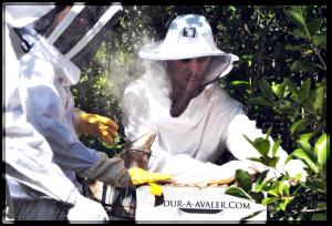 jeremy-anso-apiculture-abeille-miel