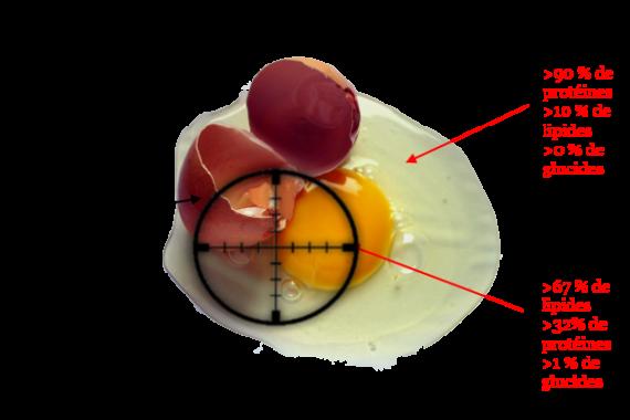 les oeufs sont d'excellentes sources de protéines pour n'importe quelles personnes qui ne présentent pas de diabète