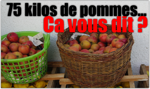 pomme-jour-mono-diete-raisin