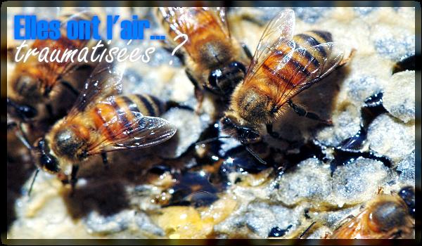 abeilles-miel-apiculture-pollen-vegetalien