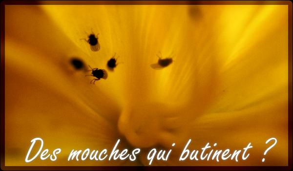 abeilles-mouches-butineuses-fleurs-pollinisation