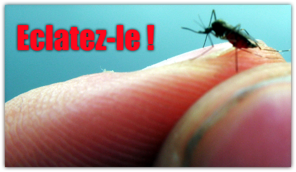 dengue-moustique-vaccin-sanofi-pasteur