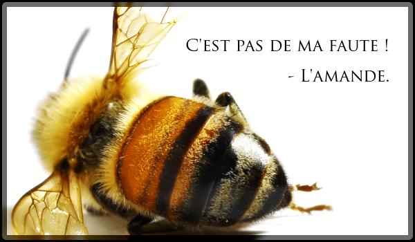abeilles-amandes-californie-pesticides-effondrement