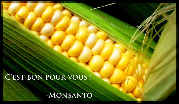 OGM-mais-rat-monsantp-seralini