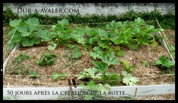 butte-exemple-50-jours-legumes