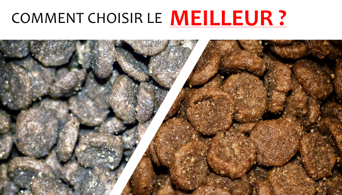 poison-croquette-chien-chat-veterinaire